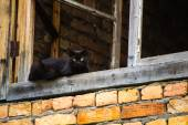 Black cat in the window frame — Foto Stock