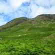 Scottish mountains covered in fern — Stock Photo #59829547