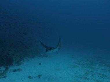 Mantor under vattnet — Stockvideo