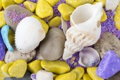 Colorful shells — Stock Photo