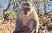Dispirited monkey — Stock Photo