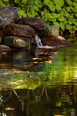 A pond in the woods — Stock Photo