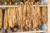 Drying leaves snuff — Stock Photo