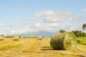 Landscape of hay bales. — Stock Photo
