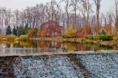 Ducks on an autumn pond — Stock Photo