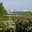 Lilacs on the bank of the Dnieper — Stock Photo #75008667