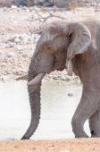 Éléphant à trou d'eau — Photo