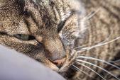 Kot z głową na poduszkę — Zdjęcie stockowe