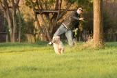 Man Throwing Ball for Golden Retriever — Stock Photo