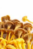 Yellow foot mushrooms — Stock Photo