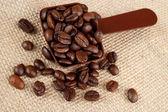 Coffee beans in measurement scoop — Stock Photo