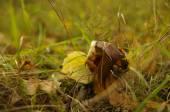 Autumn mushroom on it is yellow  green background — Stock Photo