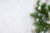 Branches were eaten on snow with a close up — Stock Photo