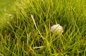 Sea white shell of a mollusk on a green grass — Stock Photo