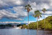 Three palm trees in the middle of the lake in Canaima park with stunning clouds at the background — Stock Photo