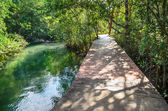 Wooden bridge through vibrant green mangrove forest and river along it — Stock Photo
