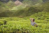 Young Women posing in green fresh tea buches at tea plantation — Stock Photo