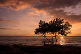 Single tree and a bench right in front of the sea facing awesome sunset — Stock Photo