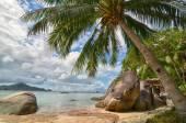 Tropical paradise - palm tree closeup and beautiful sandy beach  — Stock Photo