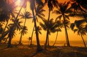 Tropical paradise: sunset at the seaside - dark silhouettes of p — Stock Photo