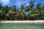 Lovely Beach with Turquoise Water and Green Palm Trees on a Trop — Stock Photo