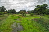 Green wet moor covered with grass and trees and a house in a tropical park — Stock Photo