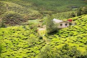 View to tea plantation with few houses among hills — Stock Photo