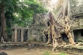 Ruins of ancient temple lost in jungle with a tree growing strai — Stock Photo