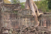 Closeup of ruined wall of an ancient Khmer temple with tree grow — Stock Photo