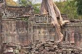 Крупным планом разрушенные стены храма древних кхмеров с дерева растут — Стоковое фото