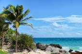 Coconut palm tree at rocky white sand beach on a windy day — Stock fotografie
