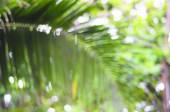 De-focused palm leaf - beauty of nature — Stockfoto