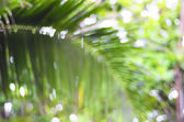 De-focused palm leaf - beauty of nature — Stock Photo
