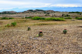 View to Tatacoa desert with few greenery - cactus and buches — Foto Stock