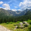 Pathway made of stones through green field and pine tree forest with mountains at background — Stock Photo #79542314