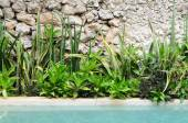Floserbed full of various green tropical plants next to the pool — Stock Photo