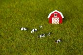 Model Farm — Stock Photo