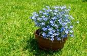 синий цветочный букет на дворе — Стоковое фото