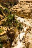 Creek in the desert, Wadi Qelt,in Judean Desert — Stock Photo