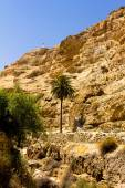 Long way to the top, palm, Wadi Qelt — Stock Photo