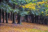 Foliage in Autumn on Pian delle Macinare, mount Cucco,  Apennine — Stock Photo