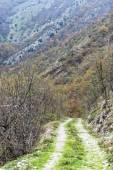 Dirt road in the woods, Monte Cucco NP, Appennines, Umbria, Ital — Stok fotoğraf