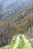 Dirt road in the woods, Monte Cucco NP, Appennines, Umbria, Ital — Stockfoto