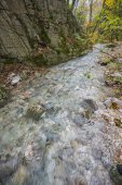 Small river in the woods in Autumn, Monte Cucco NP, Appennines,  — Zdjęcie stockowe