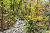 Small river in the woods in Autumn, Monte Cucco NP, Appennines,  — Stok fotoğraf