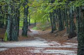 Dirt road in the forest in autumn, Monte Cucco NP, Umbria, Italy — Foto Stock