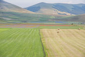 Colored fields with bales in Piano Grande, Monti Sibillini NP, U — Stock Photo