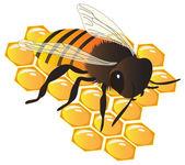 Honey bee and honeycombs — Stock Vector