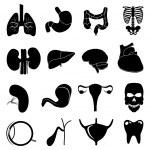Human internal body parts icons set — Stock Vector #62896417
