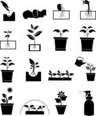 Plant grow icons set — Stock Vector